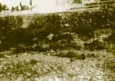 1943-xx-xx-Κεφαλονιά - Εκτελεσθέντες από Γερμανούς Ιταλοί στρατιώτες της Μεραρχίας Άκουι στην Κεφαλλονιά - tis merarxias akoui stin kefalonia