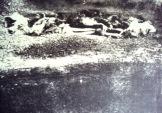 194x-xx-xx-Μαζική ταφή 1943 (Εθνική Στατιστική Υπηρεσία) - omadiki tafi