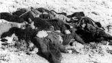 194x-xx-xx-Ηπειρος - Νεκροί μετά από τις επιχειρήσεις της Βέρμαχτ στην Ήπειρο. Πιθανότατα χωρικοί ή αντάρτες - Nekroi adartes stin ipeiro apo tin vermacht