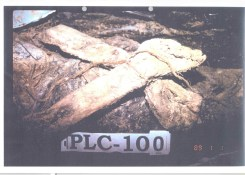 Exhibit P129-64 from Krstic trial Srebrenica PLC-100 mass grave - Victims hands were tied with a rope before executions
