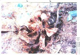 Exhibit P642-15 from Milosevic trial - Blindfolded Srebrenica victim in the Kozluk mass grave