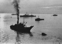 Ειδικά διασκευασμένα βρετανικά σκάφη σέρνουν τα βυθισμένα γερμανικά έξω από το λιμάνι. Στο βάθος το περίφημο βρετανικό καταδρομικό Ajax. 15 Νοεμβρίου 1944. Φωτογραφία Νο #49.